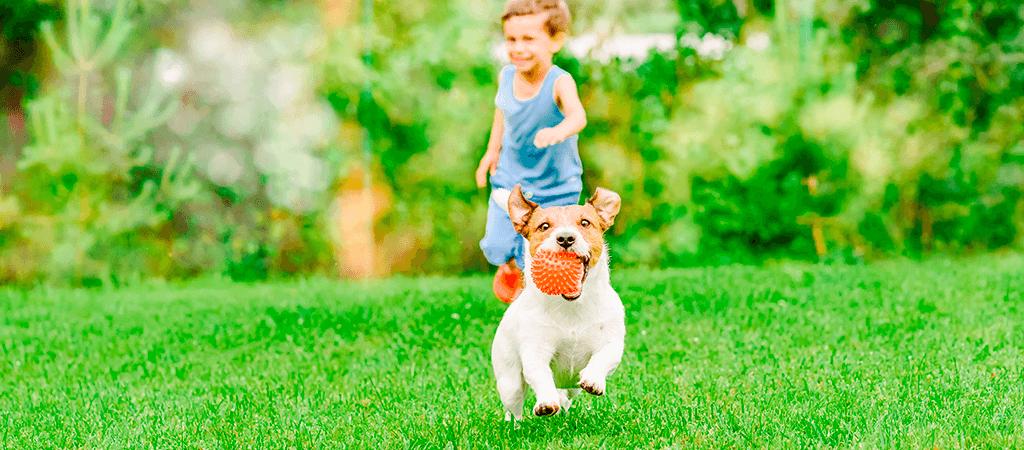niño con perro en condominio