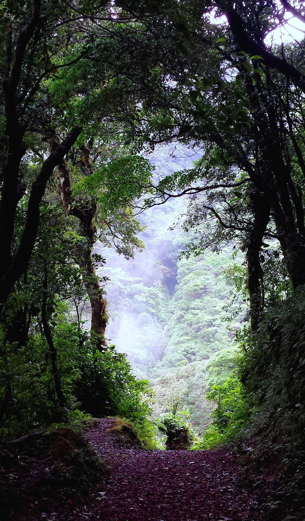 bosque-caricias-san-isidro