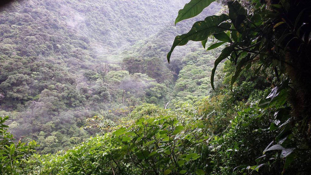 bosque-caricias