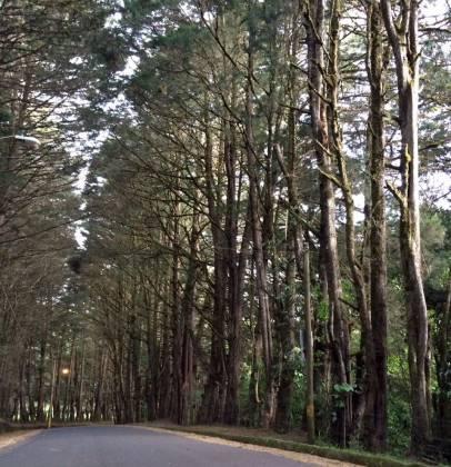 san-rafael-heredia-bosque